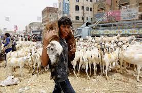man carries sacrificial animal ahead Eid alAdha Redaktionelles Stockfoto –  Stockbild