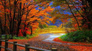 Fall Wallpapers HD make your desktop ...