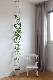 Best Indoor Vines And Climbers That Are Easy To GrowClimbing Plants Indoor