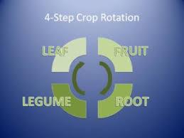 4 Step Crop Rotation Plan The Garden Academy