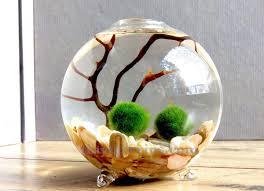 diy marimo moss ball terrariums