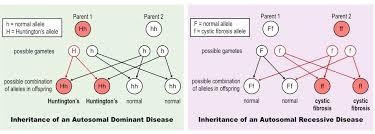 Sickle Cell Anemia Inheritance Pattern Cool Genetic Diseases BioNinja