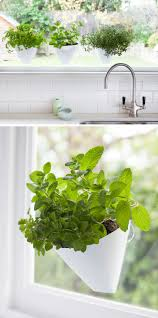 Kitchen Wall Herb Garden Indoor Garden Idea Hang Your Plants From The Ceiling Walls