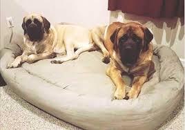 extra large pet beds. Interesting Large Mammoth BIG Breed Extra XLarge Dog Bed On Large Pet Beds H
