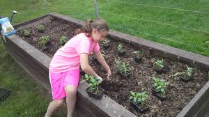 Small Picture How To Start A Winter Vegetable Garden Garden Trends