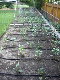 garden soaker hose. Glamorous Garden Soaker Hose News From University Of Missouri Extension I