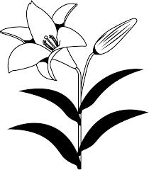 夏の花3 04 ユリ 花の無料イラスト素材 イラストポップ