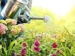 Gardening Archives   Reader\u0027s Digest