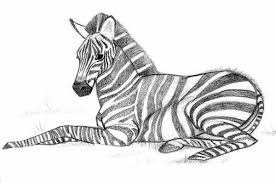 You can use our amazing online tool to color and edit the following zebra coloring pages. Zebra Coloring Pages Online Coloring Pages