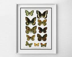 Butterfly Specimen Poster Butterfly Poster Scientific Insect Print Butterflies Chart Butterfly Art Print Insect Art Nature Art 0047