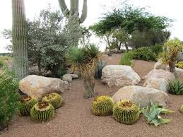 Small Picture Arizona Desert Xeriscape Page 2 MY DIY LANDSCAPING EXPERIENCE