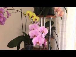 <b>Белая орхидея</b>: сорта и фото высокого разрешения на белом и ...
