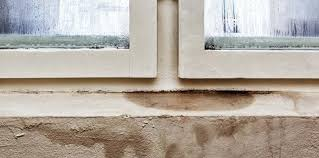 How to Get Rid of Mold in Basement | RealEstate.com