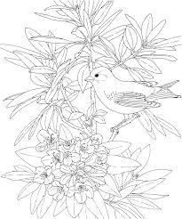Small Picture Free Printable Coloring PageWashington State Bird and Flower