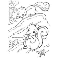 Top 25 Free Printable Squirrel Coloring Pages Online