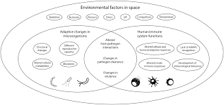 Immune recognition of putative alien microbial structures: Host–pathogen  interactions in the age of space travel