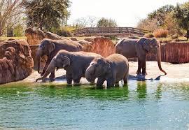 elephants at busch gardens tampa