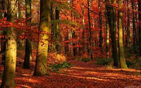 Autumn Forest Wallpaper [1920x1200 ...