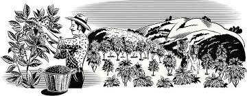 coffee plantation illustration. Modren Coffee Coffee Picker In Plantation Vector Art Illustration Inside Coffee Plantation Illustration N