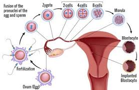 Acupuncture Points For Fertility Chart 11 Effective Acupunture Points For Infertility In Women