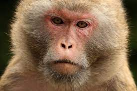 China reports first death from rare Monkey B virus
