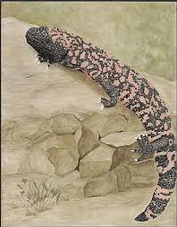 Gila Monster - Painting Art by Priscilla Baldwin