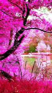 Beautiful Pink Nature iPhone Wallpaper ...