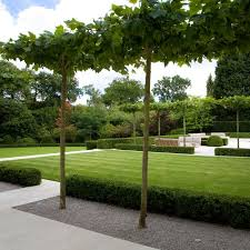 Small Picture Best 20 Hedge trees ideas on Pinterest Formal gardens Formal