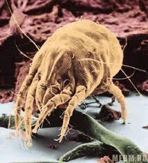 Реферат на тему Пыль и ее влияние на здоровье человека  hello html 55e030c6 png
