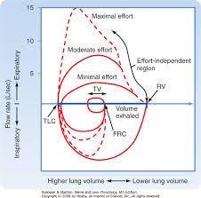 Image Result For Maximal Effort Flow Volume Curve Flow
