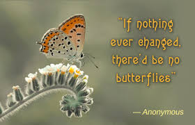 Butterfly Quotes Simple Awesomely Inspiring Butterfly Quotes For A Great Day Ahead