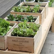 container gardens. Handy Herb Gardens In Wooden Wine Boxes Container