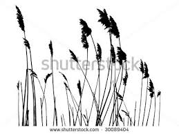 tall grass silhouette. Delighful Tall Tall Grass Silhouette  Google Search For Tall Grass Silhouette O