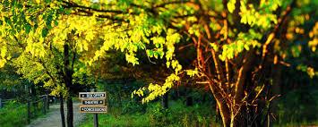 Yellow Tree Theater Seating Chart Best Tree 2017