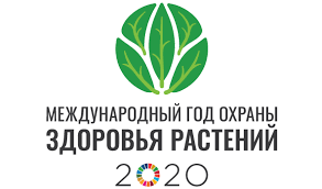 International Year of <b>Plant</b> Health 2020 | FAO | Food and Agriculture ...