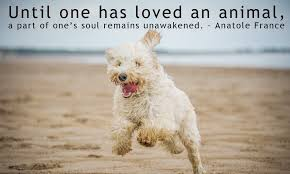 Dog Quotes Love Interesting Famous Dog Quotes Which Will Make You Fall In Love With Your Pet