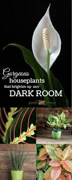 gorgeous indoor plants that love the dark