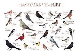 Maine Backyard Birds Field Guide Art Print In 2019 Bird