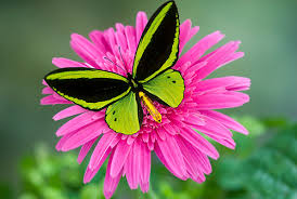 Image result for butterfly and flower images