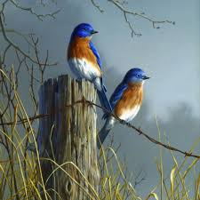 image result for fine art erflies fence and birds