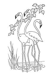 4 Flamingo Pictures Stempels Kleurplaten Dieren Tekenen En Kleuren
