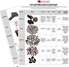 Pest Dropping Identification Chart So Youve Found Droppings In Your Home Now Its Time To