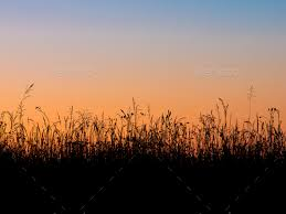 grass field sunset. Grass Field Silhouette - Stock Photo Images Sunset