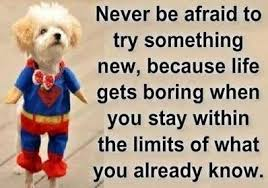 Image result for try something new quotes