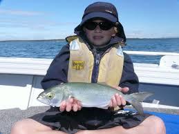 Fish Facts: Tailor - Fishing World