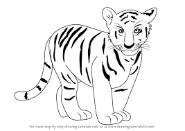 tiger drawing pictures. Interesting Drawing How To Draw Tiger Cub With Drawing Pictures