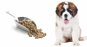 Saint Bernard Height Chart Feeding A St Bernard Puppy The Right Diet For A Giant Breed