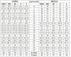 Cow Weight Chart Why Classic Size