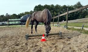 Equine Awareness Centre Herstel De Klik Met Je Paard