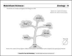 Plant Kingdom Classification Chart For Kids Biology Tree Of Life